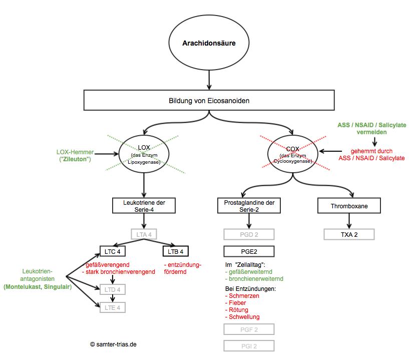 Grafische Übersciht der Wirkweise von COX-Hemmern, LOX-Hemmern und Leukotrienantagonisten im Arachidonsäurestoffwechsel bei Samter-Trias