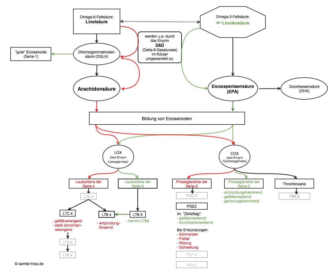 Grafik die zeigt, an welchen Stellen alpha-Linolensäure in Konkurrenz zur Arachidonsäure steht