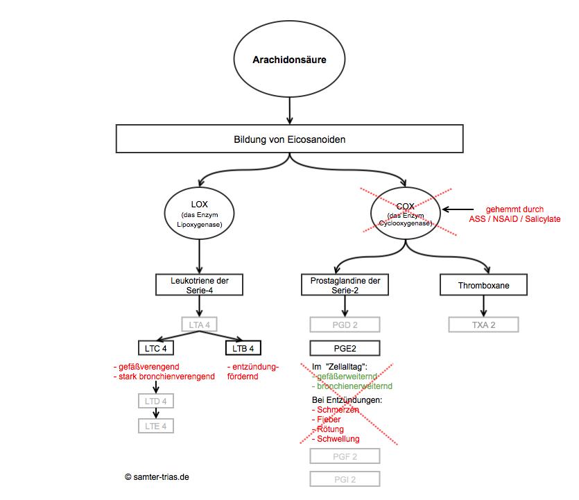 Cox-Hemmer verhindern die Bildung von Prostaglaninen, stattdessen werden verstärkt Leukotriene gebildet.