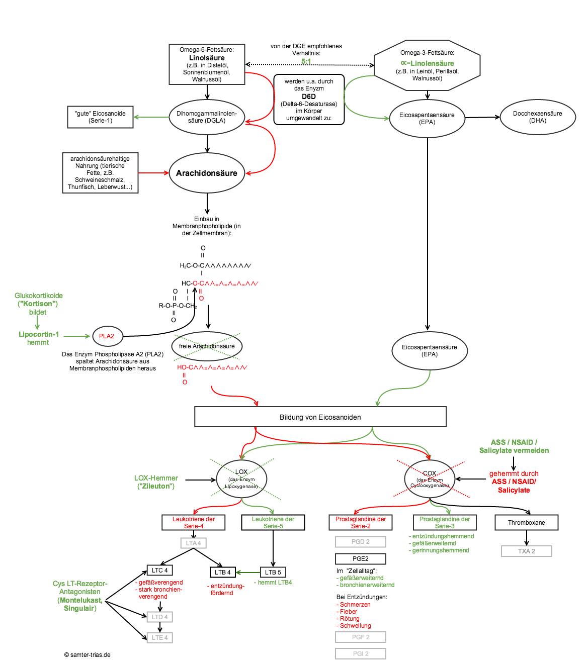 Überblick Arachidonsäurestoffwechsel und Samter-Trias